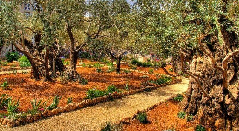 Гефсиманский сад Иерусалим