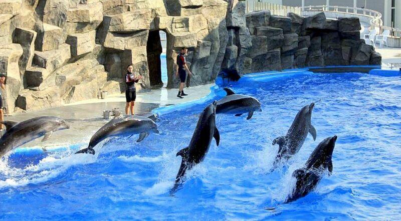 Дельфинарий Батуми Грузия