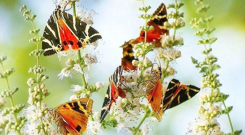 Долина бабочек Родос