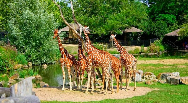 Зоопарк Diergaarde Blijdorp