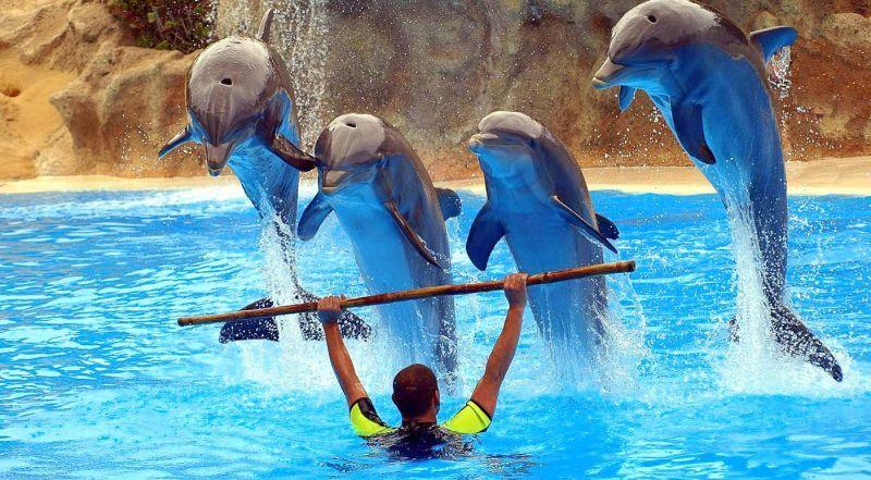 Алания дельфинарий