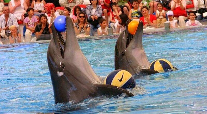 Дельфинарий и аквапарк