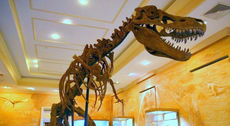 Музей естественной истории Казань
