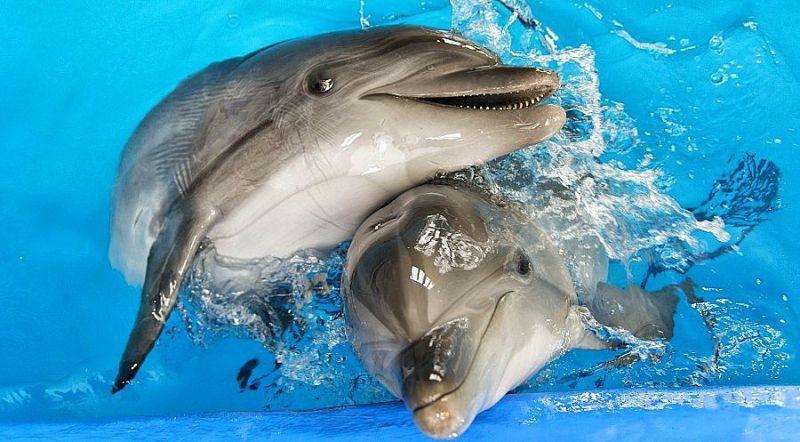 Дельфинарий Ярославль