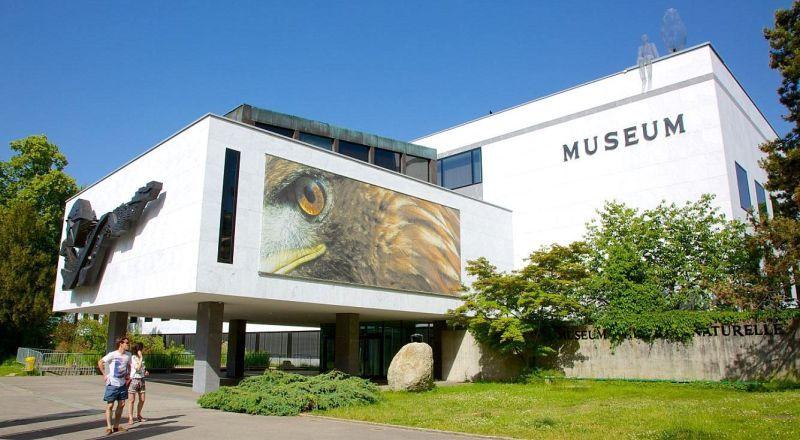 Швейцария Музей естественной истории