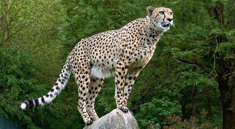 Заповедник Скала гепардов