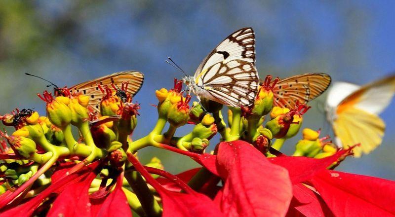 Занзибар Сад бабочек