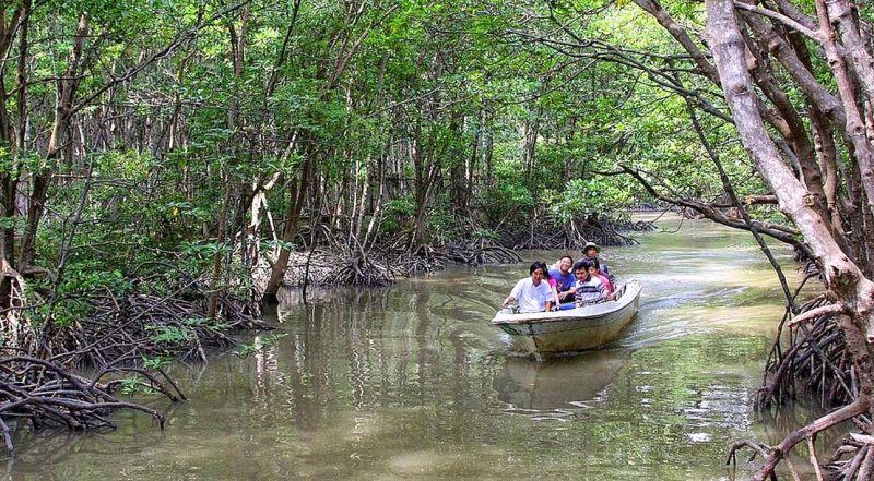 Мангровые леса Канзё