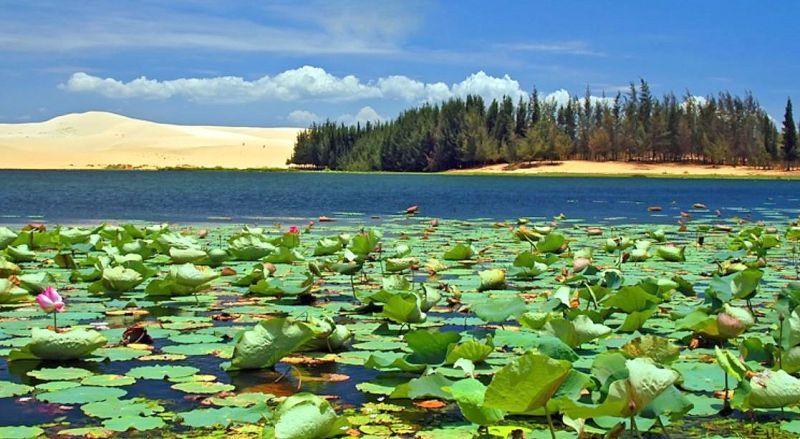 Вьетнам Озеро лотосов