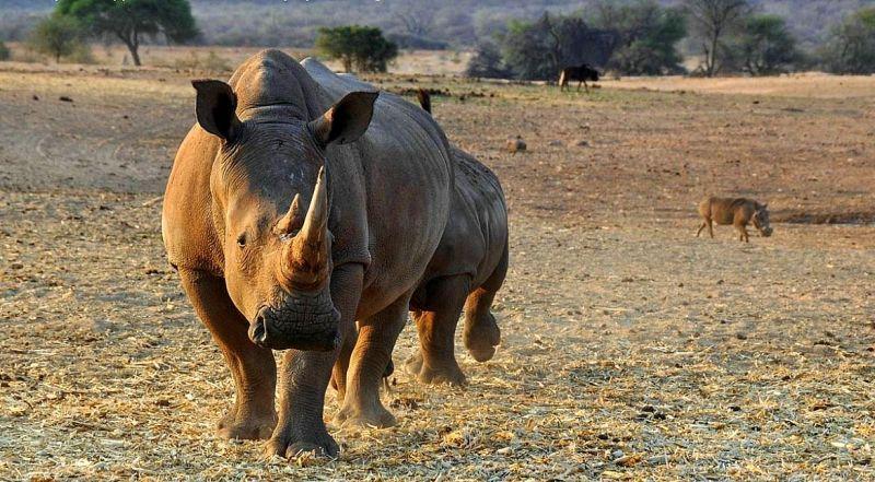 ЮАР национальный парк Пиланесберг