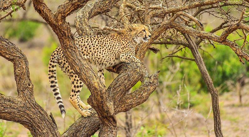ЮАР национальный парк Шушлюи-Умфолози