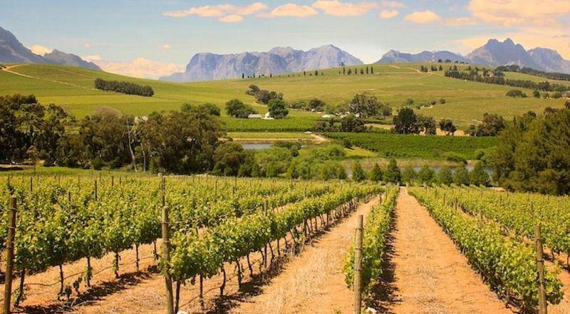 ЮАР винные долины