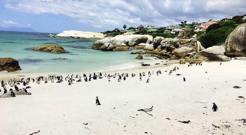 Пляж Боулдерс с пингвинами
