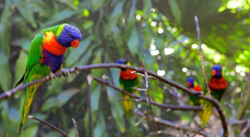 Дурбан парк птиц