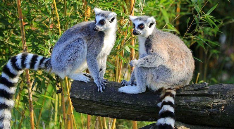 Лимассол Зоопарк